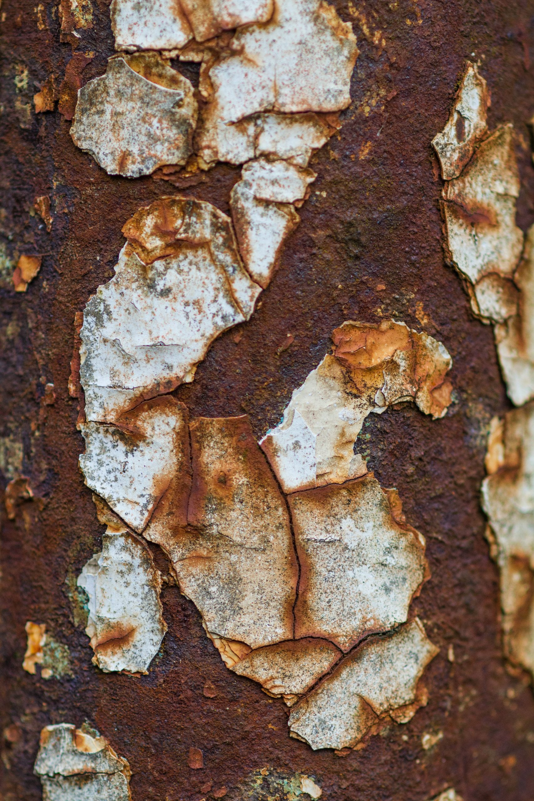 Iron rust removal services